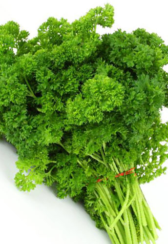 parsley curly infinite herbs